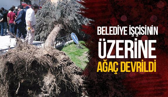 Belediye işçisinin üzerine ağaç devrildi