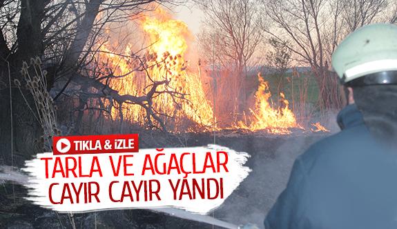 Tarla ve ağaçlar cayır cayır yandı