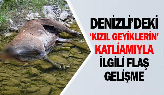 Denizli'deki 'Kızıl geyiklerin' katliamıyla ilgili flaş gelişme