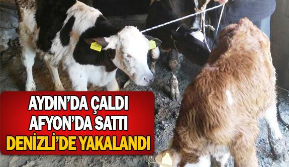 Hayvanları Aydın'da çaldı Afyon'da sattı Denizli'de yakalandı