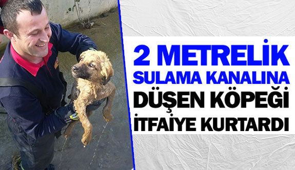 2 metrelik sulama kanalına düşen köpeği itfaiye kurtardı