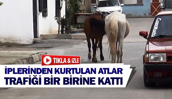 İplerinden kurtulan atlar trafiği bir birine kattı