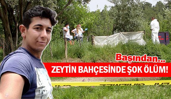 Zeytin bahçesinde şok ölüm!