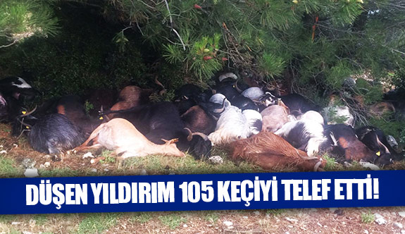 Düşen yıldırım 105 keçiyi telef etti