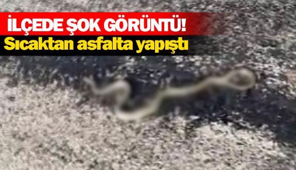 Sıcaktan asfalta yapıştı