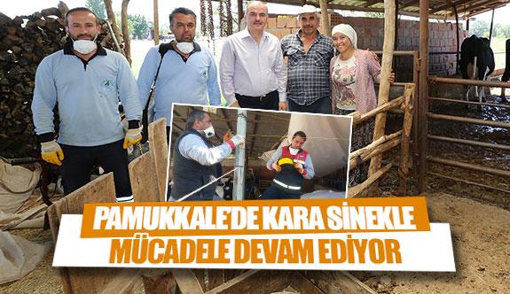 Pamukkale'de kara sinekle mücadele devam ediyor