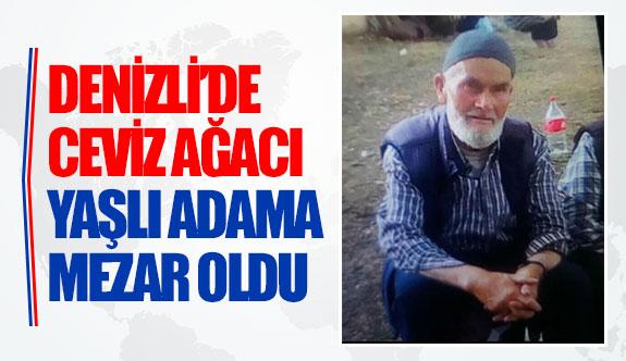 Denizli'de ceviz ağacı yaşlı adama mezar oldu
