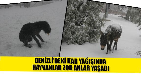 Denizli'deki kar yağışında hayvanlar zor anlar yaşadı
