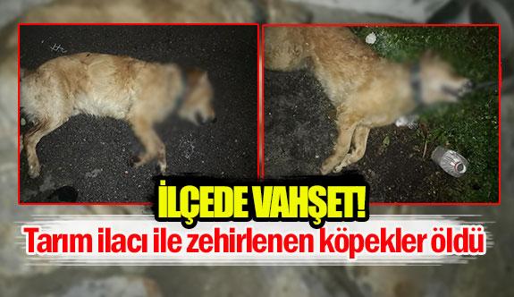 Tarım ilacı ile zehirlenen köpekler öldü