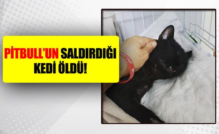 Pitbull'un saldırdığı kedi öldü!
