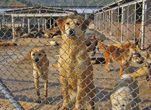 Sokak hayvanları için sosyal ağ