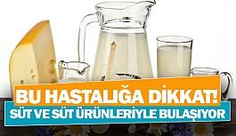 Süt ve süt ürünleriyle bulaşıyor
