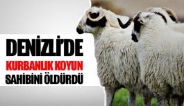 Denizli'de kurbanlık koyun sahibini öldürdü