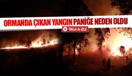 Ormanda çıkan yangın paniğe neden oldu