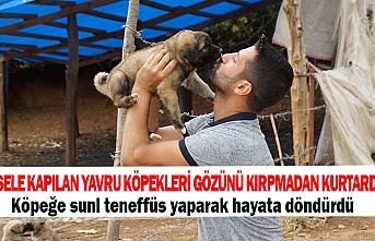 Sele kapılan yavru köpekleri gözünü kırpmadan kurtardı