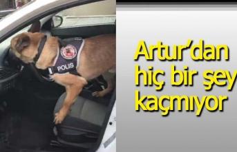 Polis köpeği Artur'dan hiç bir şey kaçmıyor!