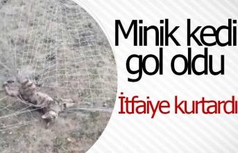 Minik kedi gol oldu