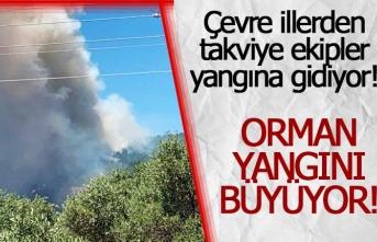 Orman yangını büyüyor!