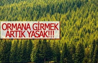 Ormanlara girmek artık yasak!