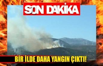 Bir ilde daha orman yangını çıktı!