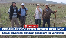 Çobanlar devletten destek bekliyor