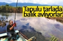 Tapulu tarlada balık avlıyor