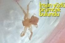 İnsan yüzlü örümcek bulundu