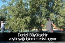 Denizli Büyükşehir zeytinyağı işleme tesisi açıyor
