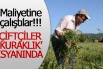 Çiftçiler 'kuraklık' isyanında