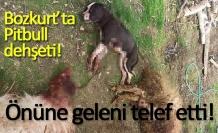 Bozkurt'ta Pitbull dehşeti!