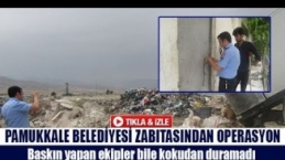 Pamukkale Belediyesi Zabıtasından operasyon