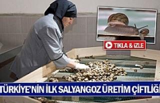 Türkiye'nin ilk salyangoz üretim çiftliği