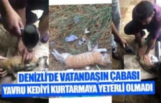 Denizli'de vatandaşın çabası yavru kediyi...