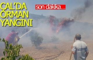 Çal'da orman yangını!