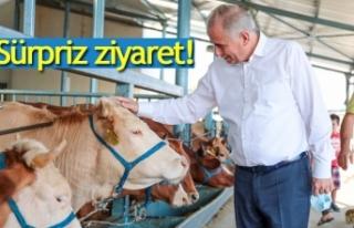 Canlı hayvan pazarına sürpriz ziyaret!