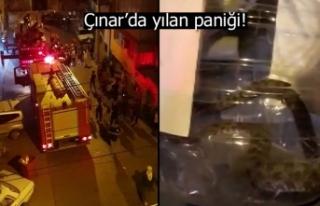 Çınar'da yılan paniği!