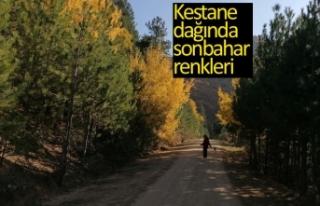 Kestane dağında sonbahar renkleri
