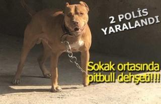 Köpeğini polislerin üzerine saldı!