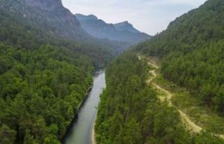 Muğla Sığla Ormanları'nın korunacak alanları...