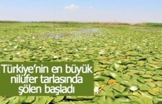 Türkiye'nin en büyük nilüfer tarlasında şölen...