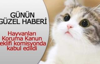 Hayvanları Koruma Kanun teklifi komisyonda kabul...