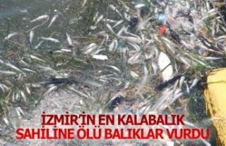 İzmir'in en kalabalık sahiline ölü balıklar...