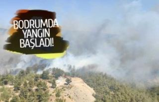 Bodrum'da orman yangını başladı!