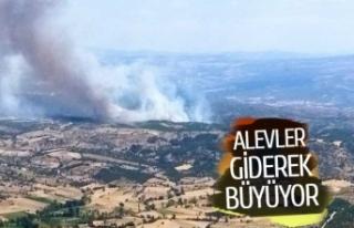 Manisa'daki orman yangını giderek büyüyor!