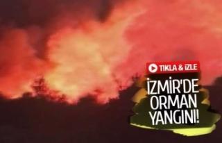 İzmir'de orman yangını! (GÖRÜNTÜLÜ)