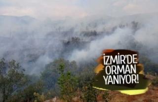İzmir'de yangın başladı!