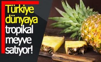 Türkiye'nin tropikal meyve ihracatı 7 milyon dolara koşuyor