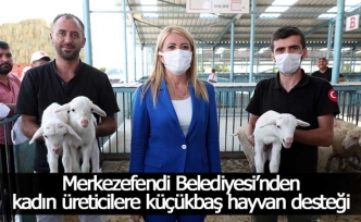 Merkezefendi Belediyesi'nden kadın üreticilere küçükbaş hayvan desteği