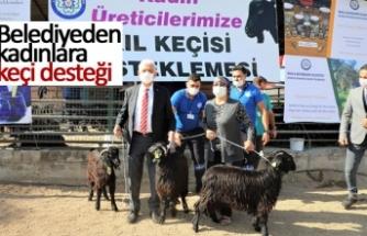 Belediyeden kadınlara keçi desteği