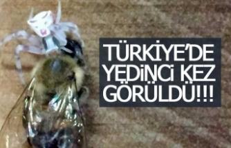 Türkiye'de 7. kez görüldü